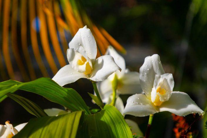 NATURE fleur gouttes perlées