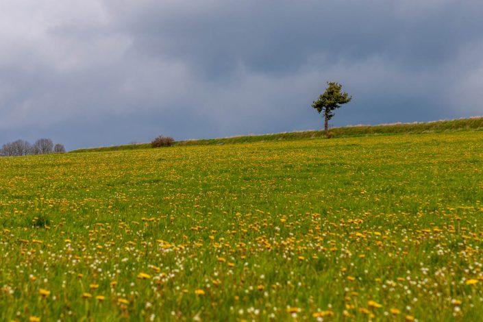 NATURE arbre prairie nuages